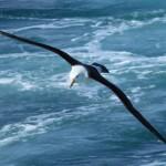 Öngyógyítás és gyógyulás MA-URI® szárnyain repülve
