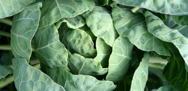 Zöldszínű zöldségekkel az endometriózis ellen és az egészség mellett
