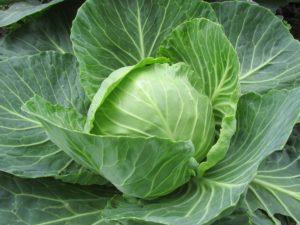 white-cabbage-2705228_1920